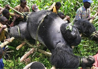 Virunga National Park/BBC